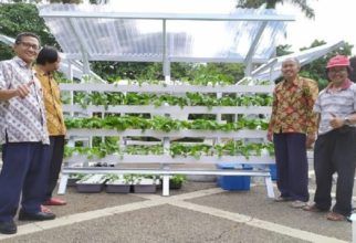Campus Parking Become More Beautiful bacause Hydroponic Vegetables